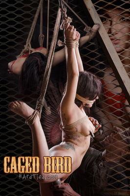 Hardtied - Apr 22, 2015: Caged Bird | Gabriella Paltrova | Jack Hammer